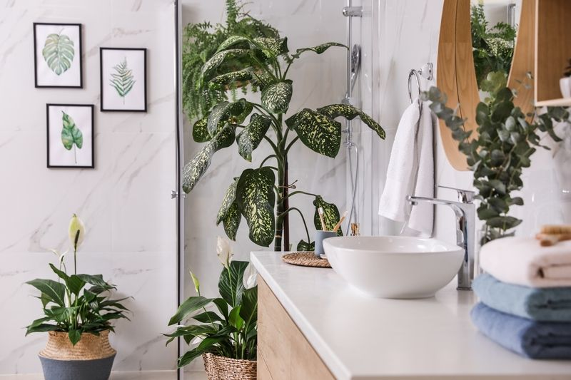 Plants that thrive in the bathroom - Jones Garden Centre